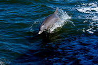 Two Dolphin Cruises of 2011